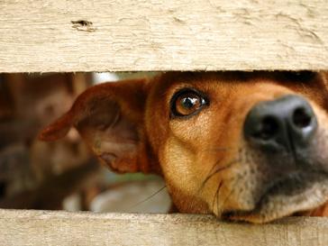 Закона, защищающего животных от людей в России до сих пор нет
