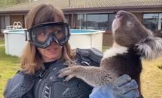 Журналистка повелась на розыгрыш и надела бронежилет, чтобы взять на ручки коалу (видео)