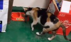 Видео с котом, который кормит мышь обедом, стало вирусным