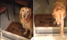 однажды собака врезалась стеклянную осторожна видео