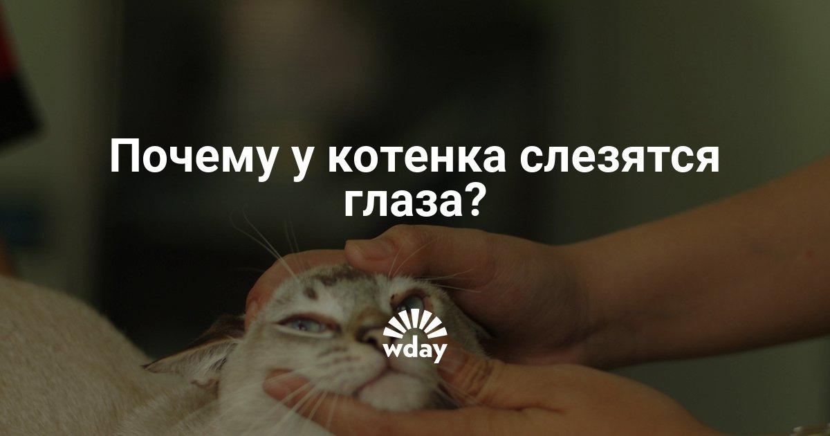Почему у котенка после еды слезятся глаза