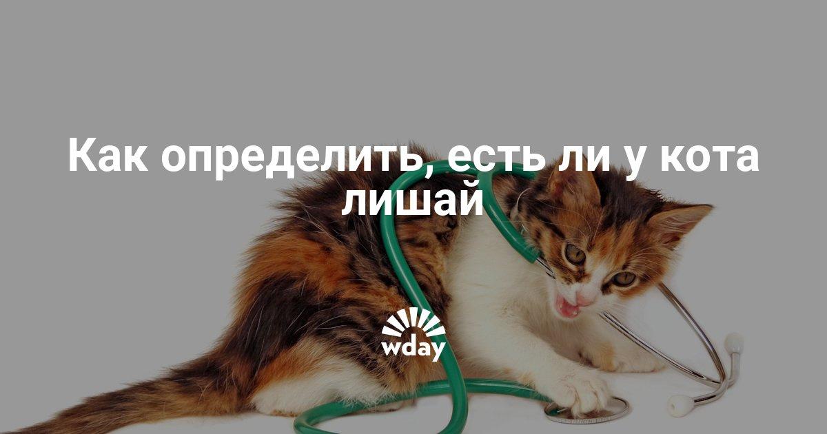Чем лечить лишай у кошки в домашних условиях быстро