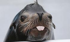 Новосибирский дельфинарий откроется 2 августа: фото