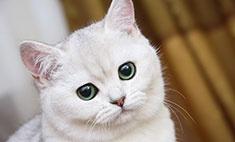 Пушистые, «плюшевые», лысые: самые красивые кошки Ростова!