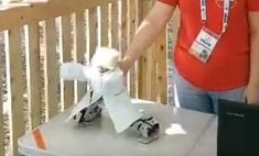 дмитрию рогозину показали робота папахе танцующего лезгинку видео