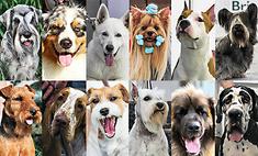 Картинки с выставки: 18 самых симпатичных собак престижных пород