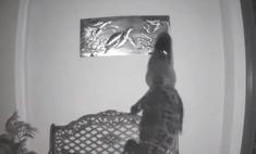 флориде аллигатор напал картину черепахами видео