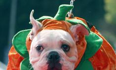 Самые «страшные» костюмы на Хэллоуин для животных