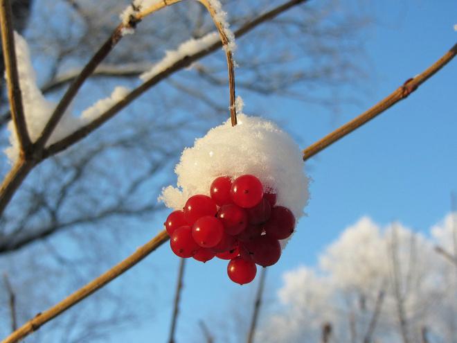 Красивые фото зима