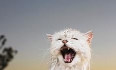 Если у кошки лезет шерсть, что делать?