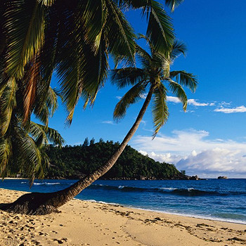 Сейшелы славятся своими классическими «баунти-пейзажами» со склоненными к океану пальмами. Где-то там, на террасе одного из бунгало и соседнем пляже, снимался фильм «Возвращение Эммануэль».