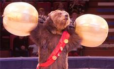 В Воронежском цирке показывают медвежий балет