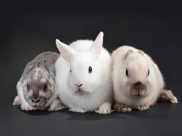 Кролики стали культом в этом году