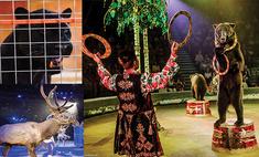 Зверская любовь! 13 самых ярких звезд цирка