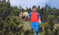 спасение мальчика преследовавшего медведя попало видео