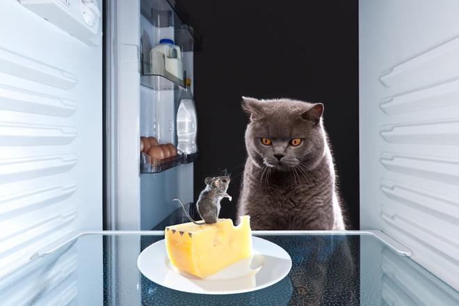 как избавиться от мышей на первом этаже