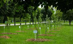 В усадьбе «Архангельское» высажено 114 деревьев при поддержке Hugo