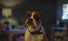 Рождественское видео про пса и лесных зверей на батуте покорило сеть