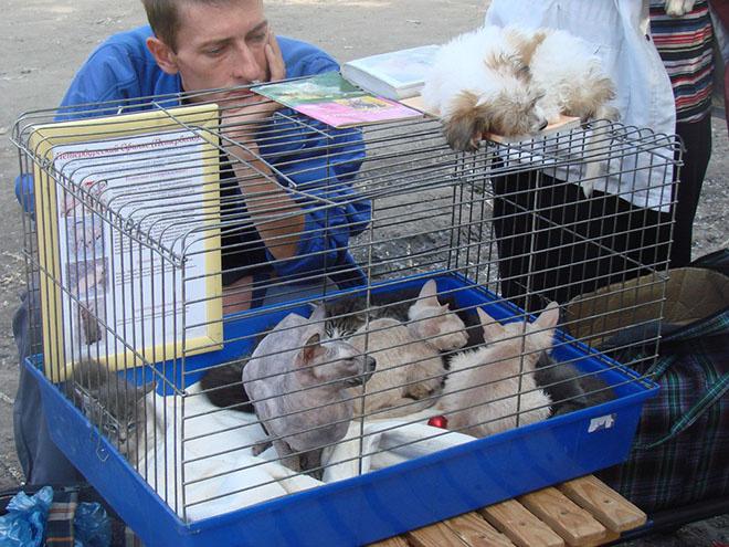 Афиша Омска, животные, кошки, собаки, «Хитрый рынок»