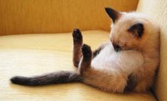 Кошки, коты и котята, уснувшие в смешных позах (много-премного фото)