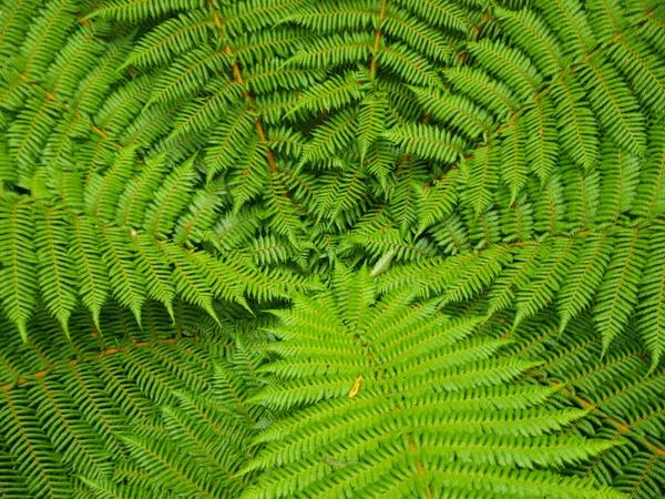 Тенелюбивые растения как поставить