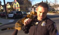 Самое милое нападение на полицейского (видео, ставшее вирусным)