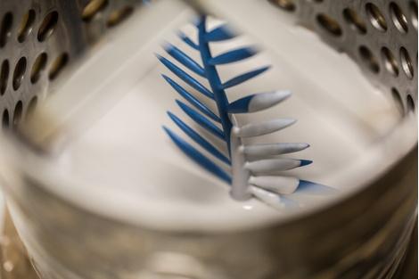 Компания Chopard обновила дизайн Золотой пальмовой ветви