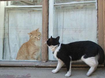 Санкт-Петербург отмечает «Кошкин день»