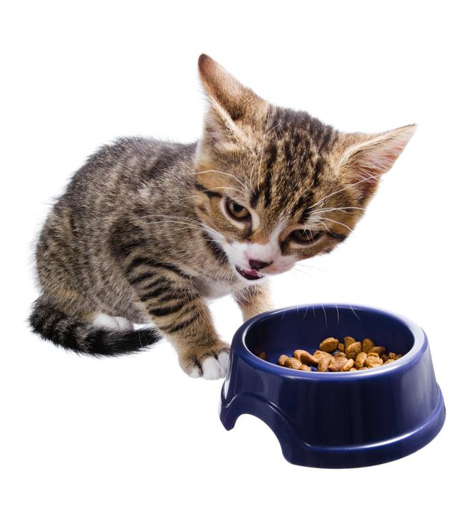 Как отучить кота от корма сухого