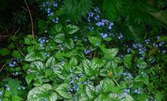 Садовые цветы: главные новинки сезона