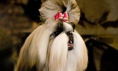 В Нью-Йорке открылась самая престижная собачья выставка