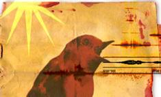 Птичье пение стало радиохитом