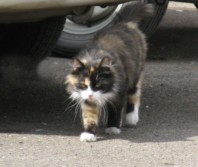В Красноярском крае спасатели эвакуировали с необитаемого острова кота