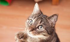 У кошки перхоть! Совет ветеринара