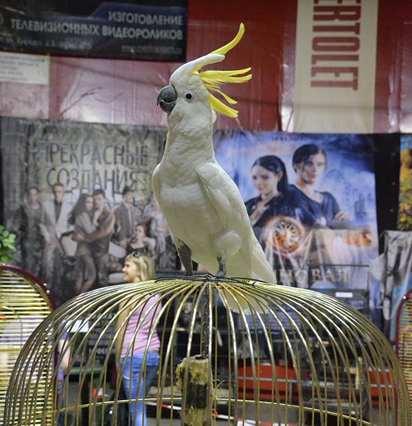 Выставка попугаев в Калуге