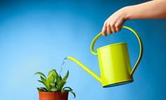 Поливаем комнатные растения правильно
