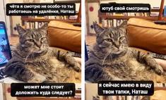лучшие мемы котов интернета версии maxim