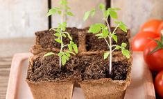 Тепличные условия: как вырастить ранние овощи