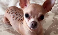 Катя Жужа ставит над своей собакой бьюти-эксперименты
