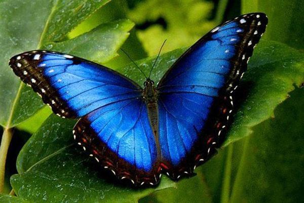 выставка бабочек в Тюмени