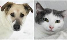 Котопёс недели: собака Герда и кошка Джоконда
