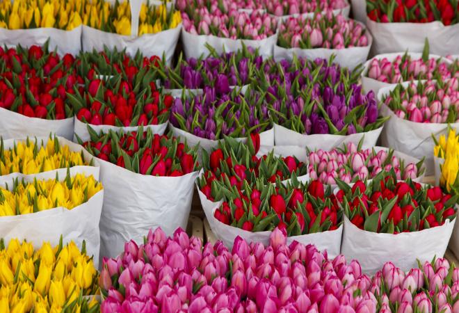 Букет тюльпанов: фото