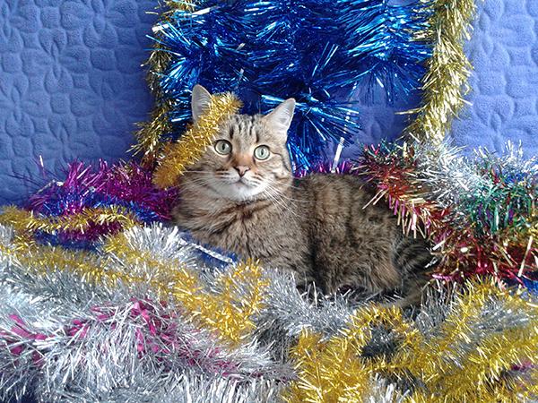 Пушистик года: 50 самых очаровательных котиков Тольятти, картинки котов