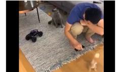 Реакция кота на хозяина, играющего с другим котом, покорила Интернет (видео)
