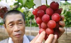 угощайся самый виноград мире 000 долларов гроздь