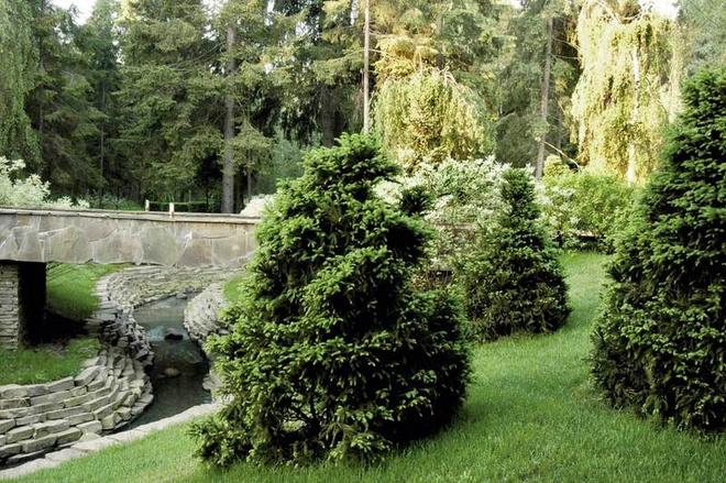 На берегах речки высажены влаголюбивые растения.