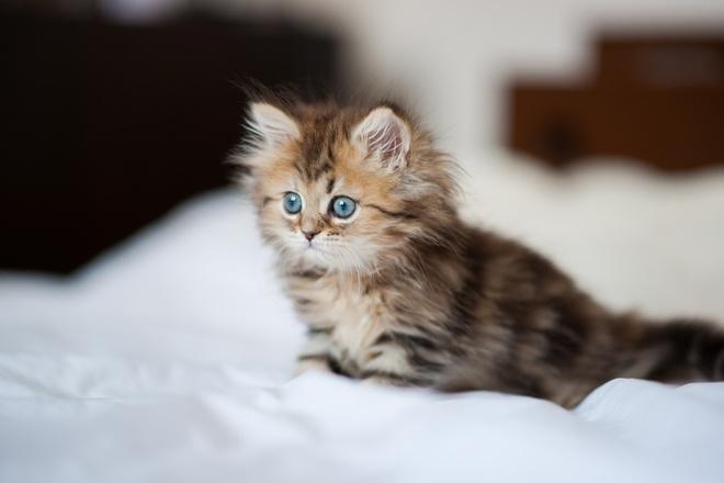 чем промыть глаза котенку