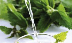 Полезные свойства растения: для чего пьют крапиву