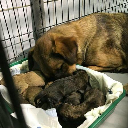 Собака только-то родила щенка что делать