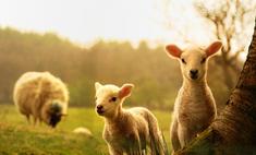 Семейное кино: лучшие фильмы о животных